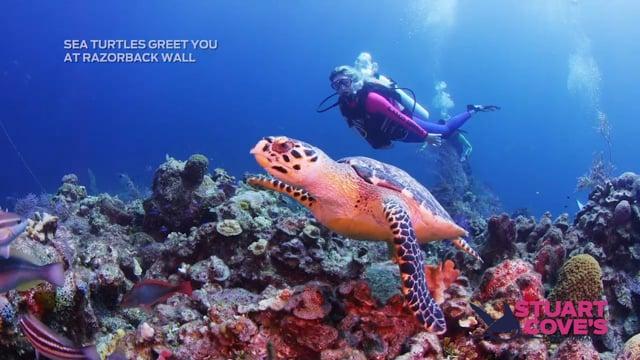 Stuart Cove - Razorback Wall