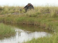 Brown trout hunt, why we fly fish