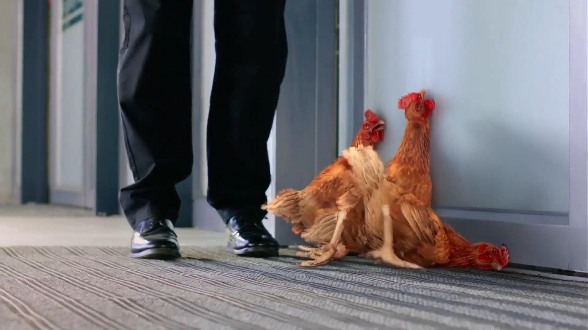 Paulo Henriques Migros Supermarket Chickens