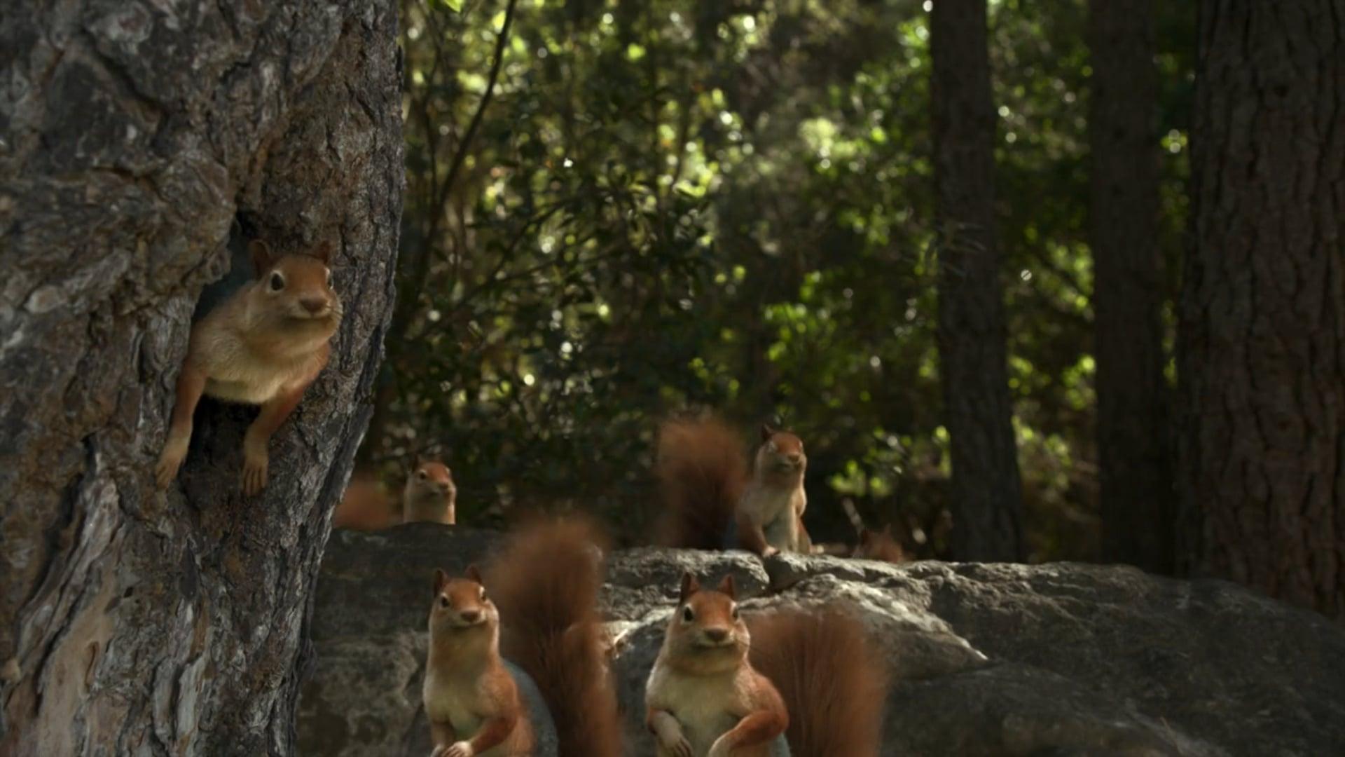 Paulo Henriques-Erikli Water-Squirrel