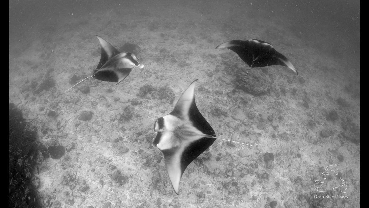 Deep Blue Divers   October Highlights