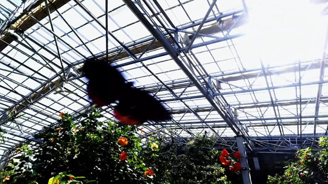 PAL : Butterfly Museum