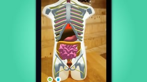 Augmented anatomy for Primary School