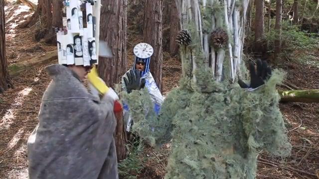 Djerassi Stark: The Wood Wide Web