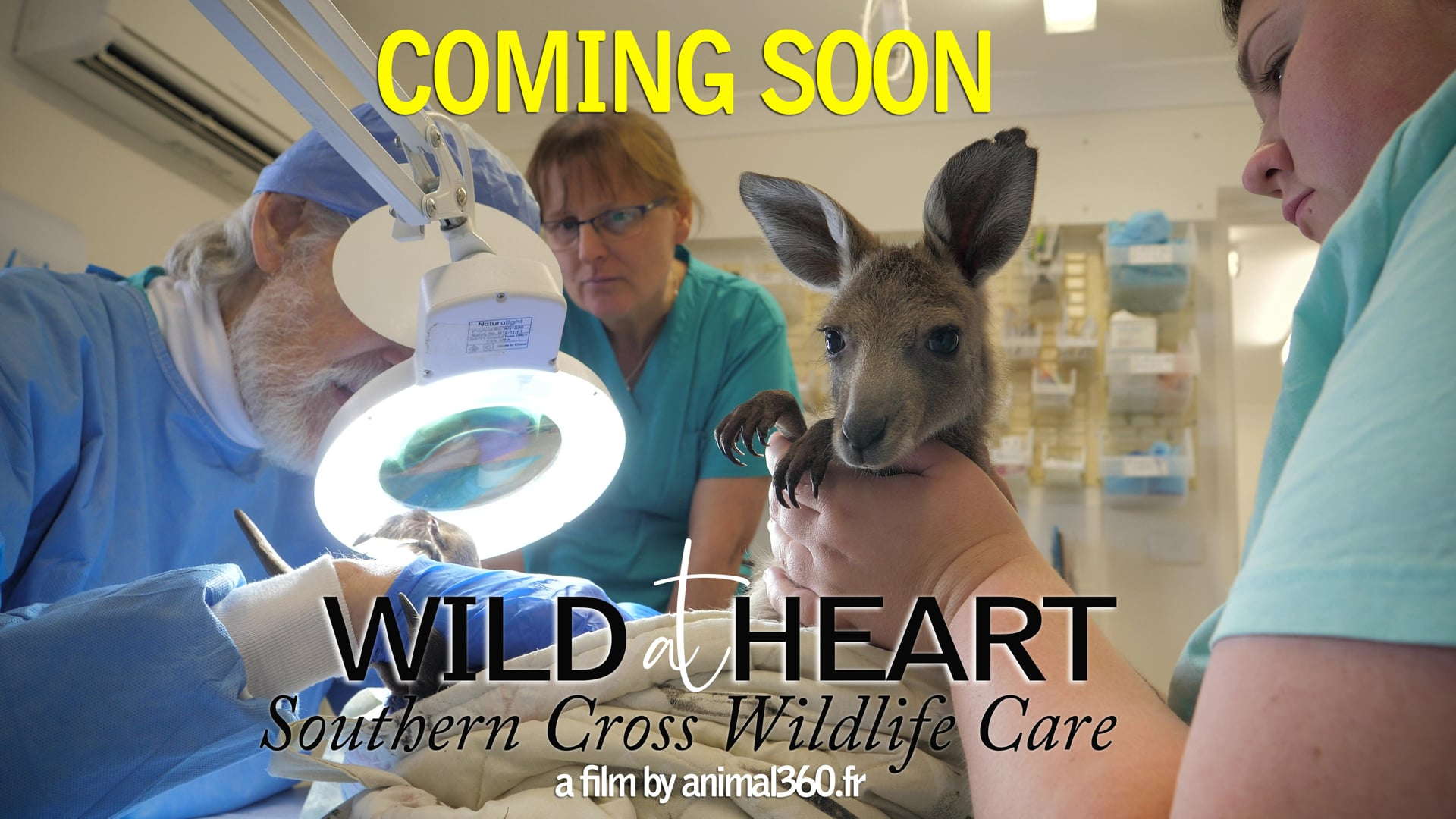 TRAILER Wild at Heart - southern Cross Wildlife Care