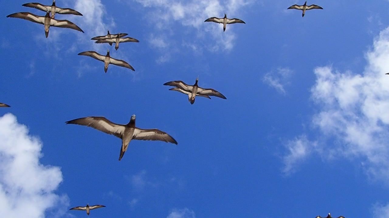 Birds flying overhead at Huon Reef, New Caledonia