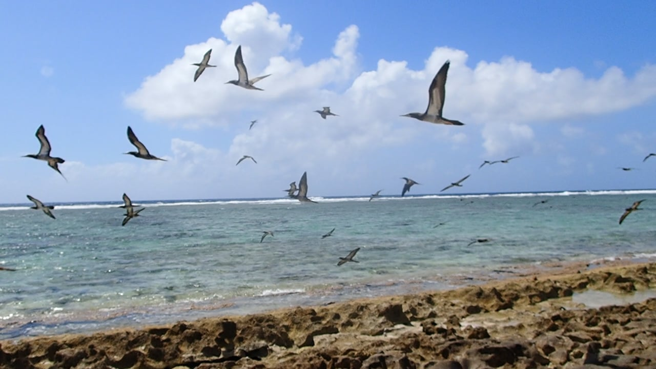 Huon Reef, New Caledonia, a Bird Sanctuary