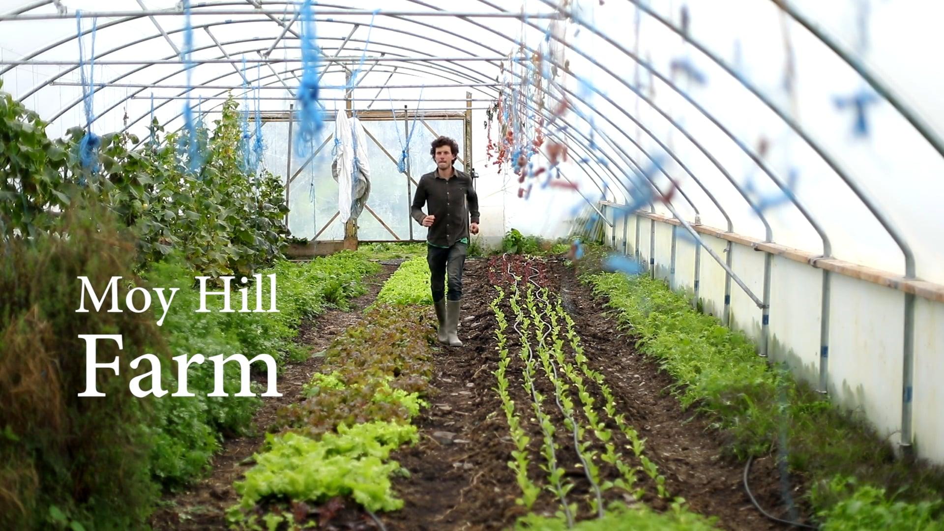 Moy Hill Farm - Part of the Irish Seed Savers