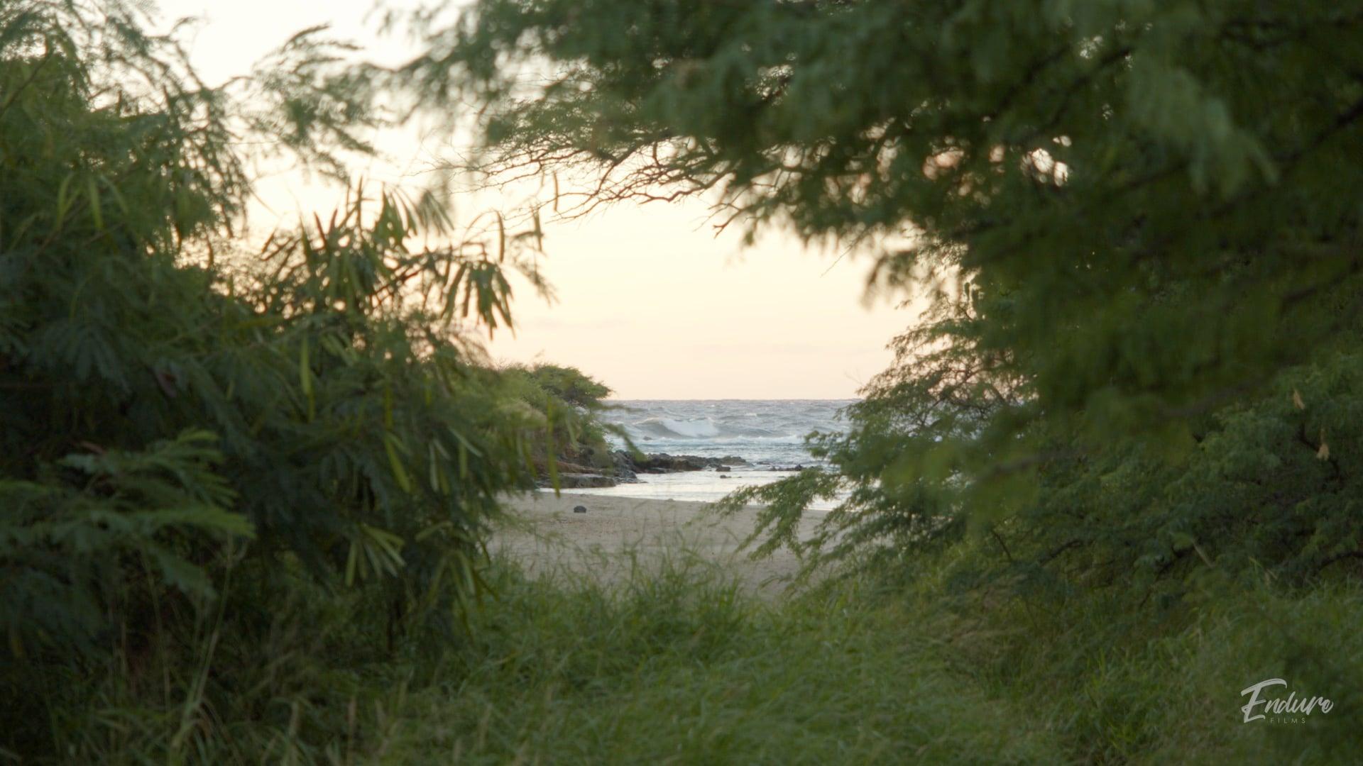 Alan Davis Beach : Nature Film