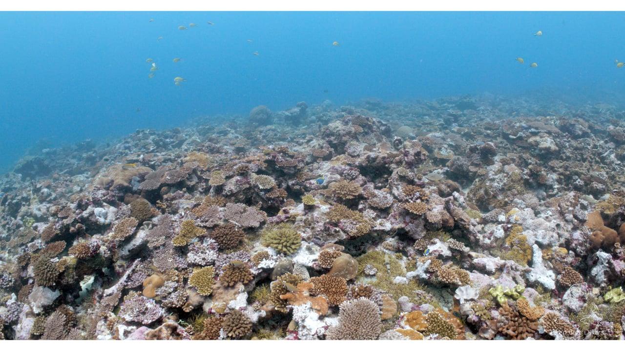 Deep Blue Divers   November Highlights