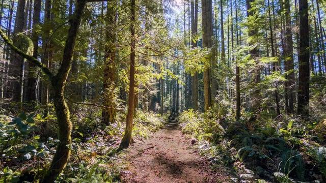 Traditional Loop Hike, Snoqualmie Region in WA - 4K HDR