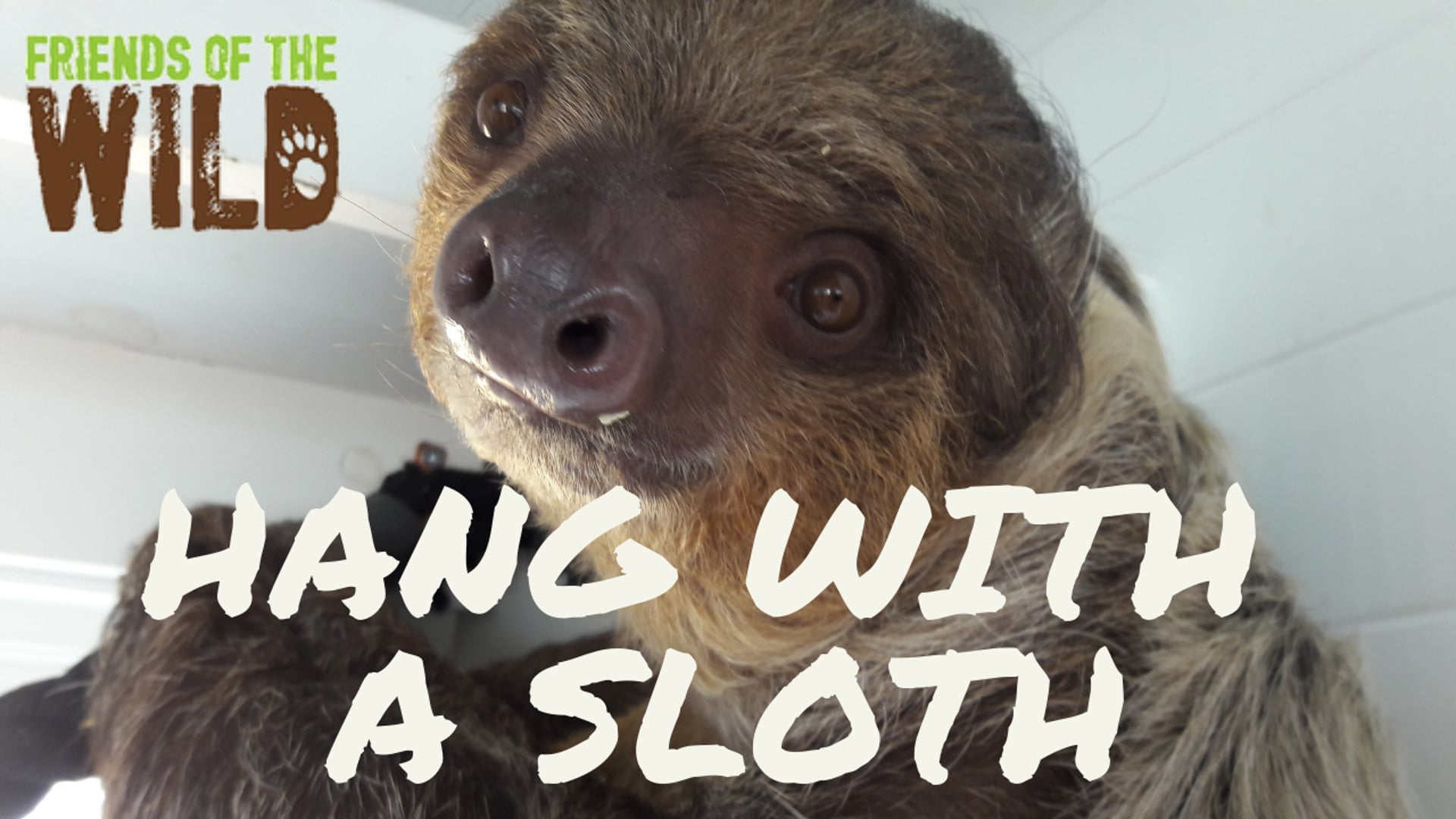 Winchester the Sloth wants to meet YOU
