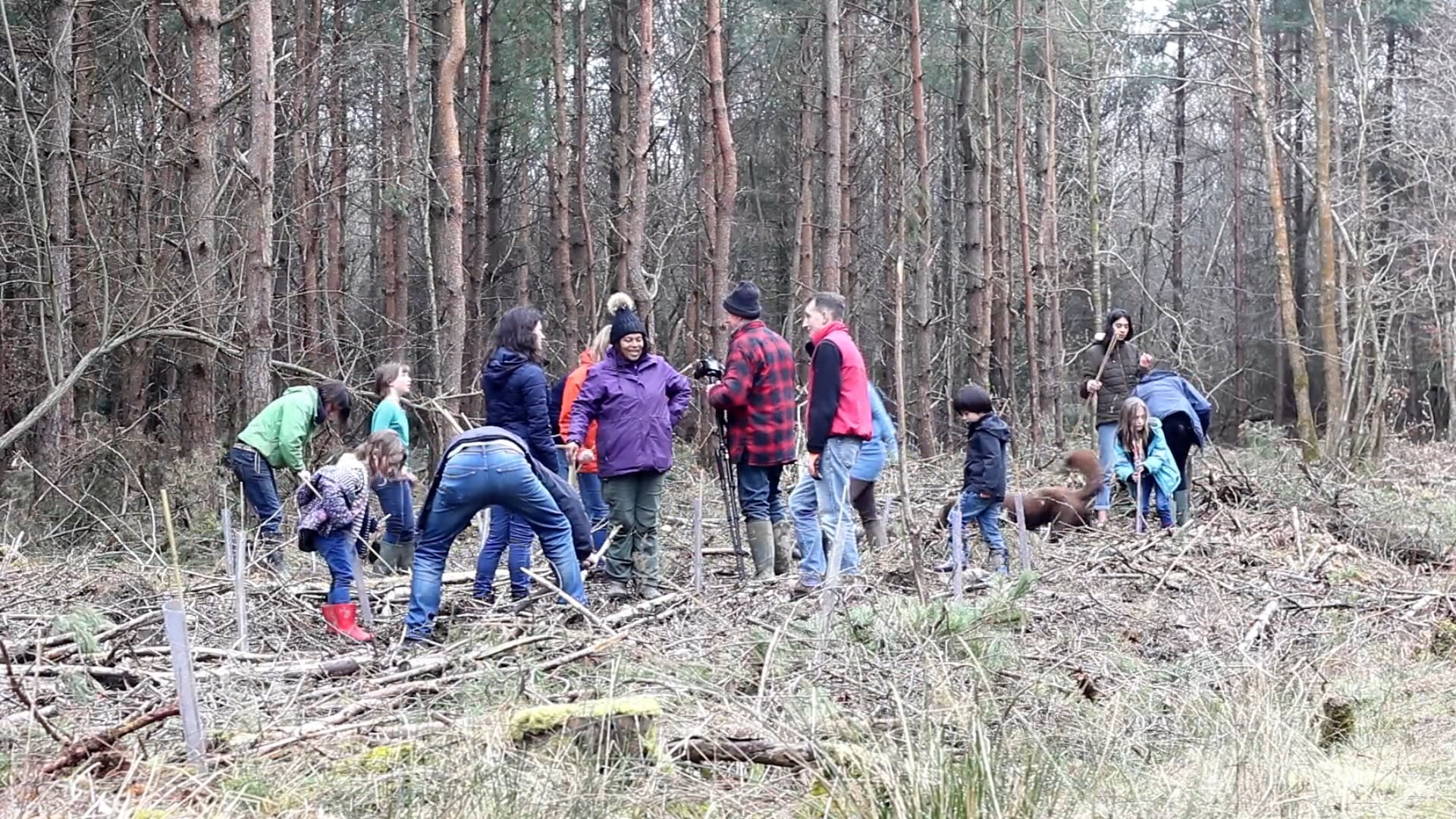 """Vert Woods Community Woodland """"Ancient Woodland Coming Alive Again"""""""