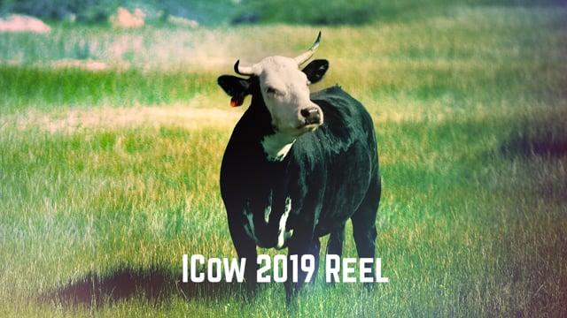 Impatient Cow Inc. - Video - 1