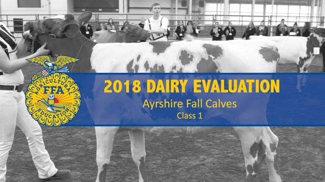 2018 Dairy – Class 1 Ayrshire Fall Calves