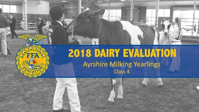 2018 Dairy – Class 4 Ayrshire Milking Yearlings