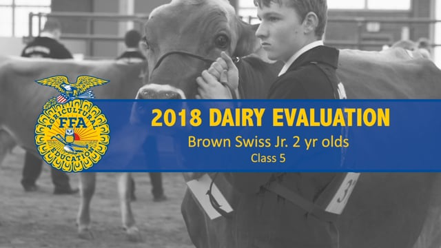 2018 Dairy – Class 5 Brown Swiss Jr. 2 yr. olds