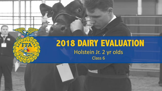 2018 Dairy – Class 6 Holstein Spring Yearlings