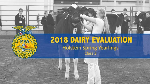 2018 Dairy – Class 3 Holstein Spring Yearlings