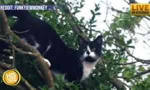 Woman Leaves Boyfriend Long List of Cat-Care Instructions