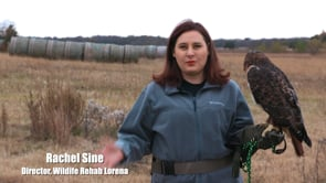 Wildlife Rehab Lorena