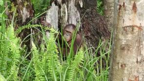 Step into the Wild - Borneo Orangutan Conservation Trip
