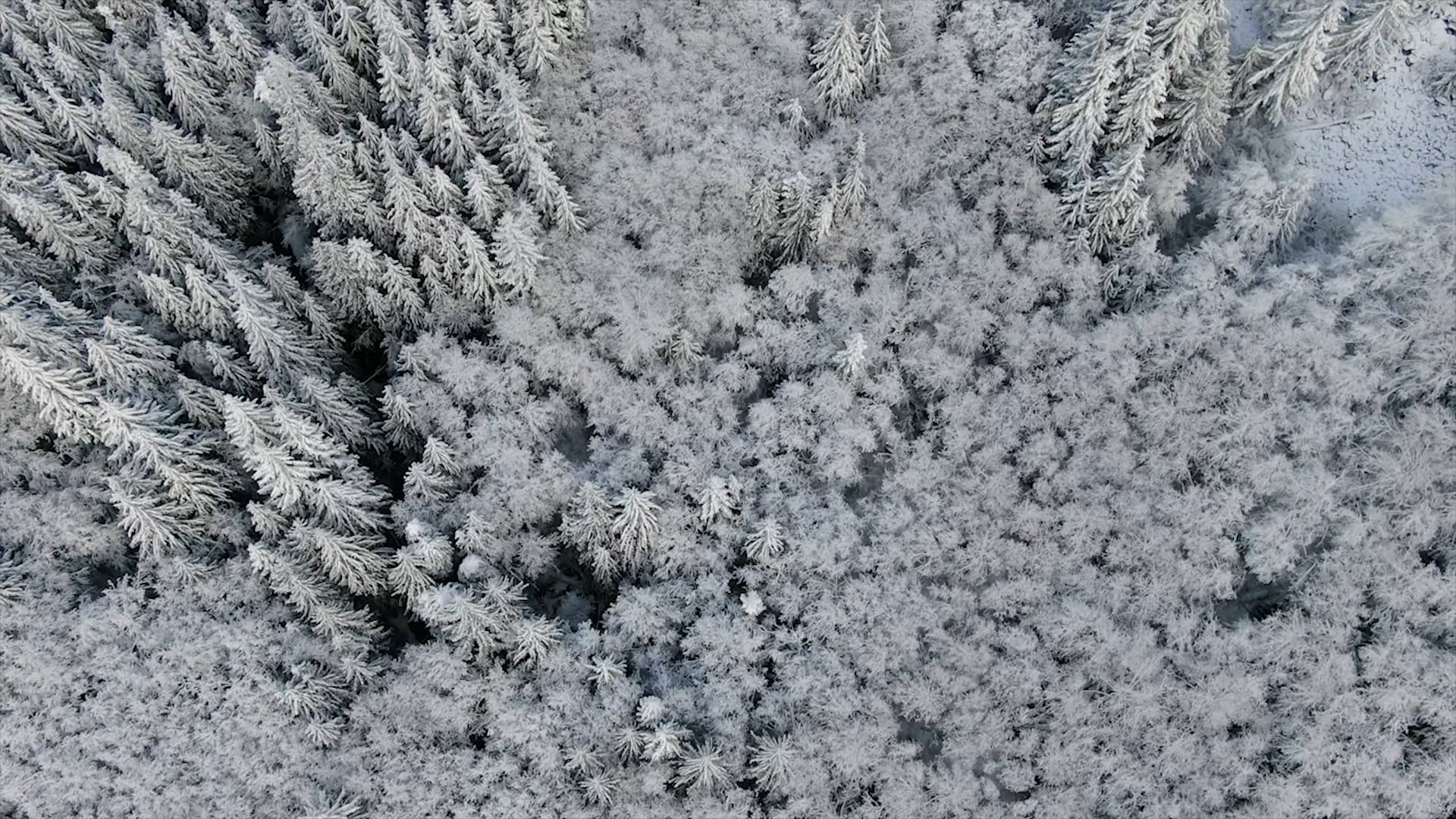 Mt. Hood wintery fly-over by kevin kubota