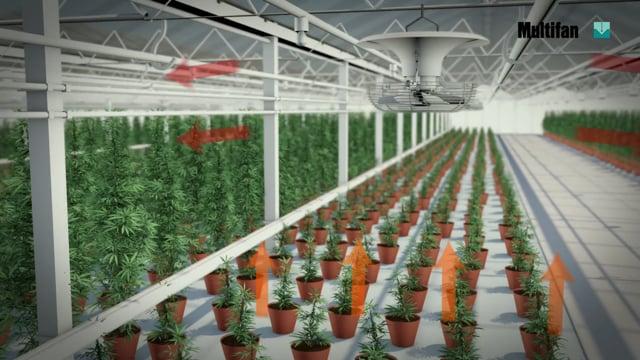 V Flofan for medical cannabis  -  Vostermans Ventilation