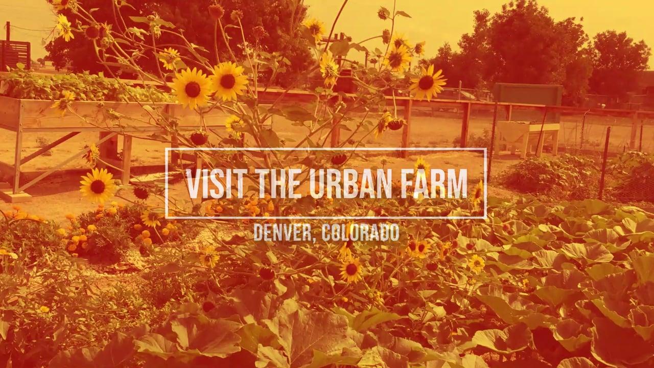 Field Trips at The Urban Farm at Stapleton