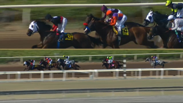 Lord Nelson | 2016 Triple Bend G1