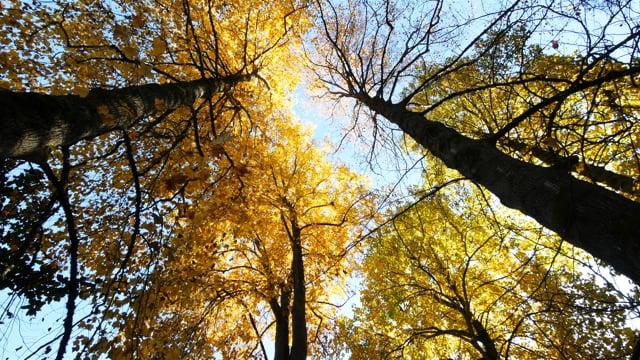 Fall In Washington Park Arboretum. Part 1