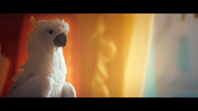 vw noisy little bird