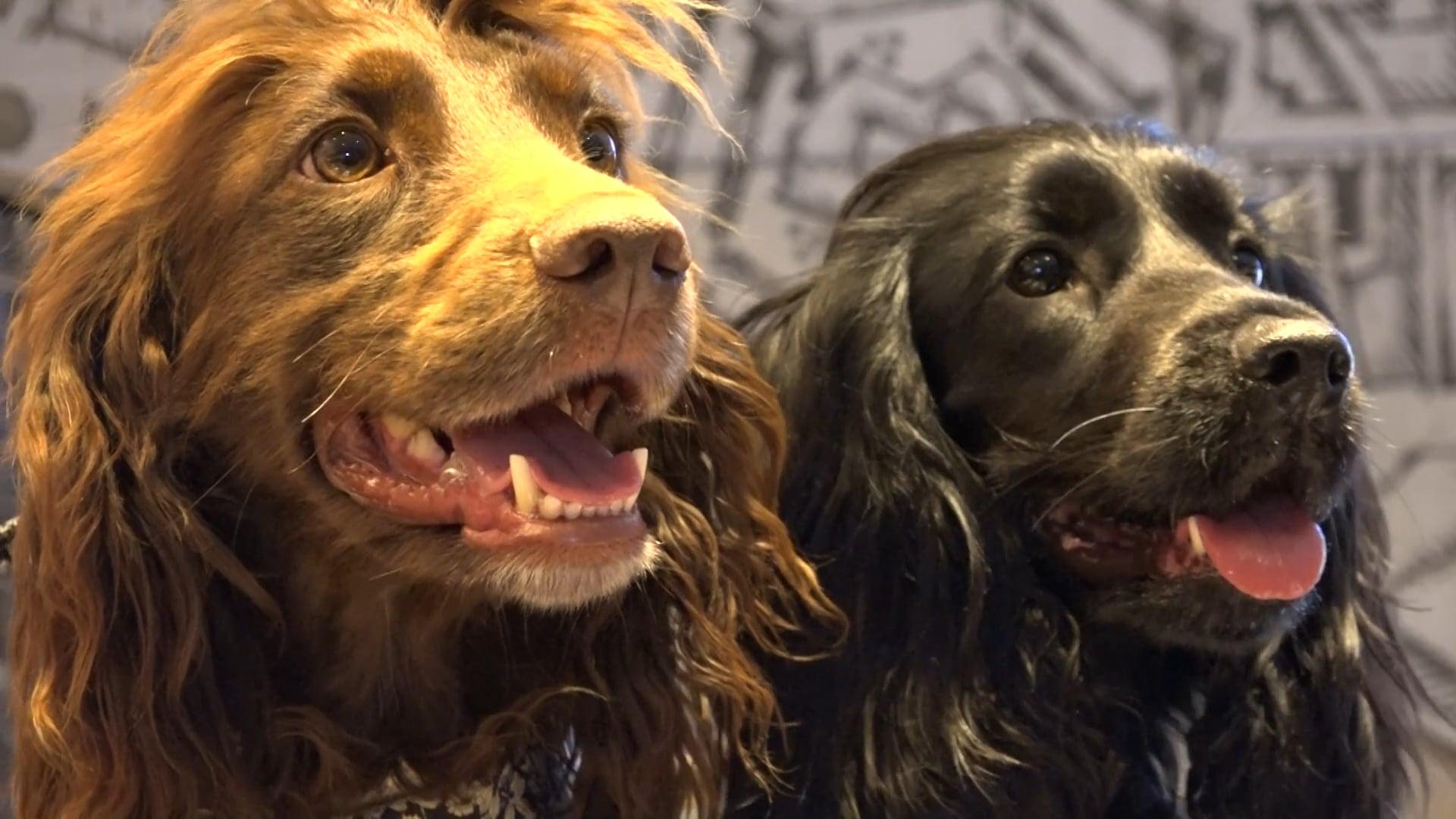 Beattie Dogs