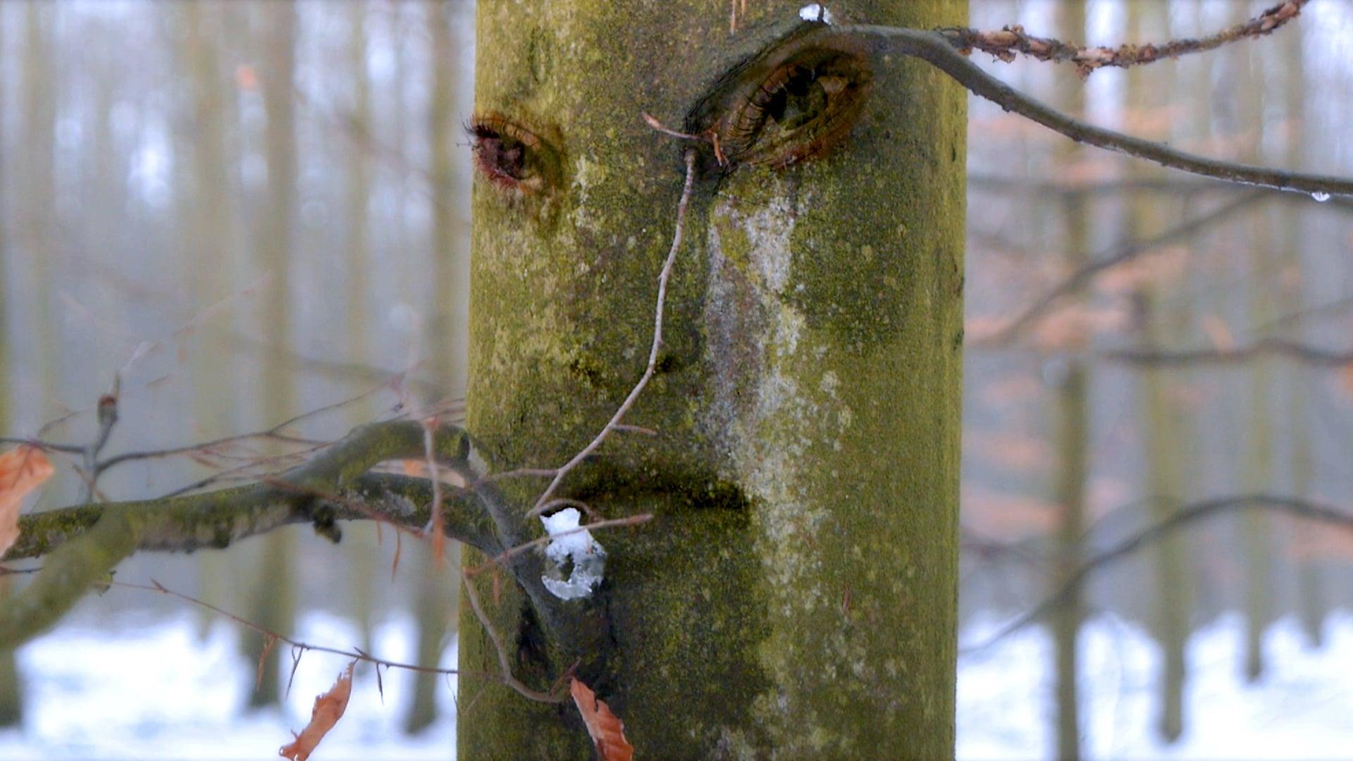 'Forest Dwellers' - film excerpt 'Milkmaid'