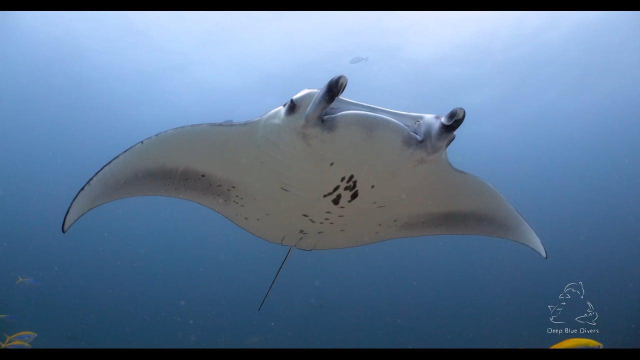 Deep Blue Divers   Highlights of 2018