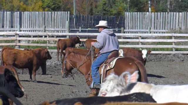 How a Feedlot Works