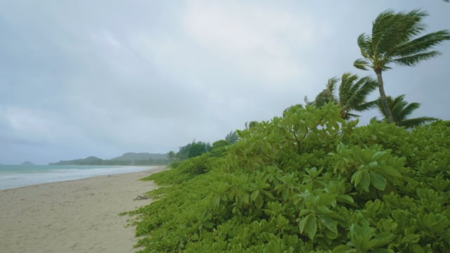 Hawaii Oahu Beach. Part 1