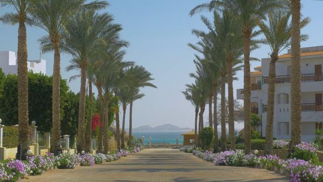 Under The Palms, Egypt