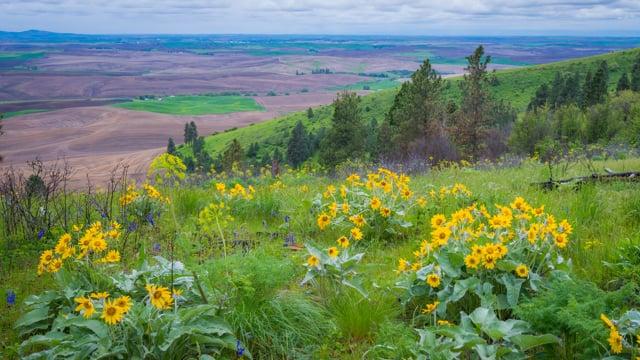 View from Pine Ridge Trail