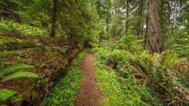 Walking in the Woods -Grand Ridge Trail