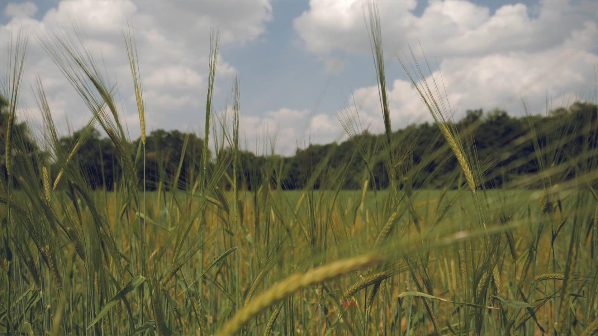 Cereal - Reinassance in the Field - Teaser