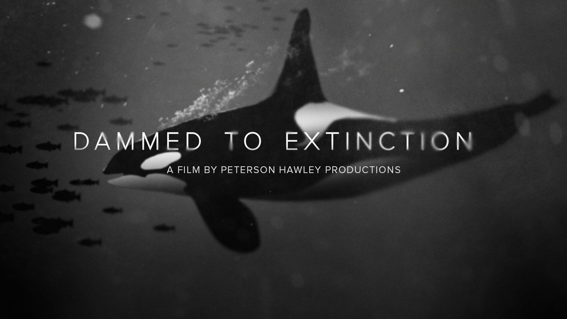 Dammed to Extinction Trailer