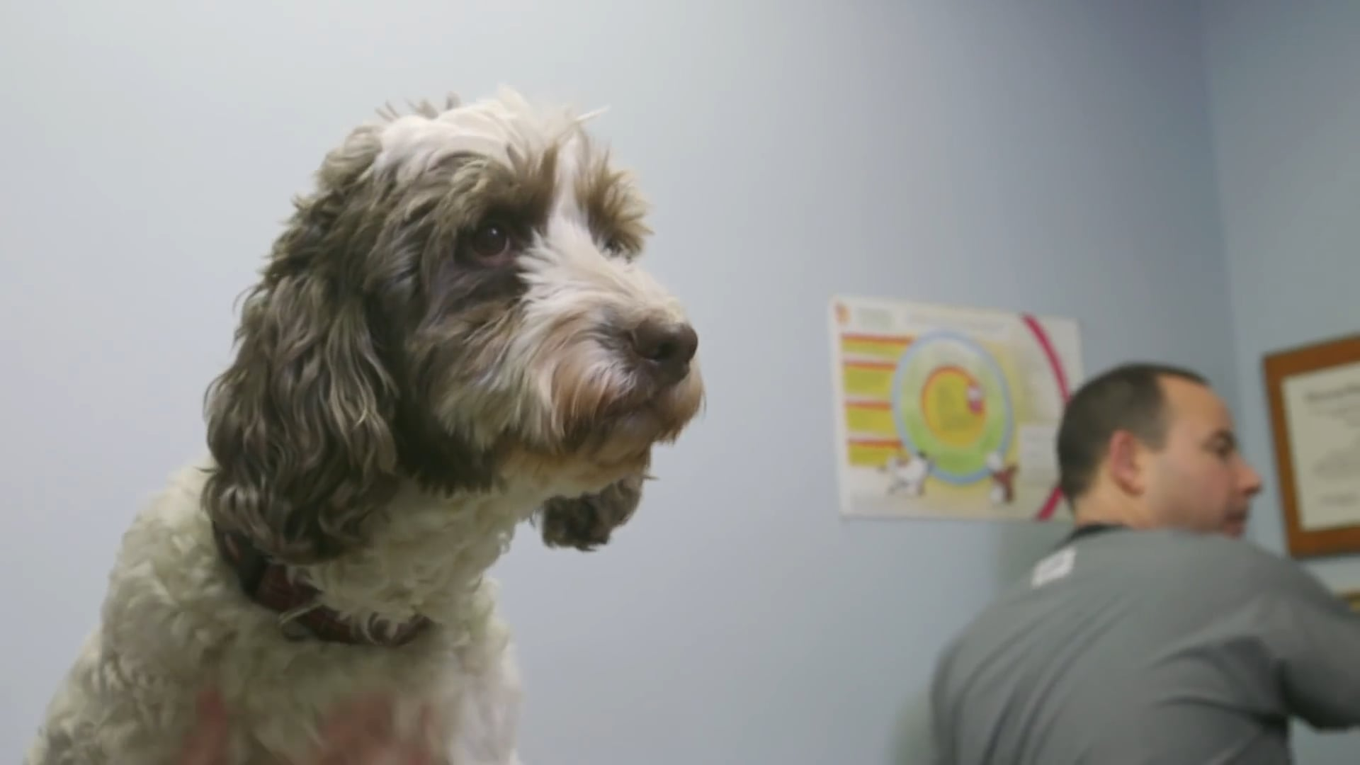 CBD for Your Pet? | Consumer Reports