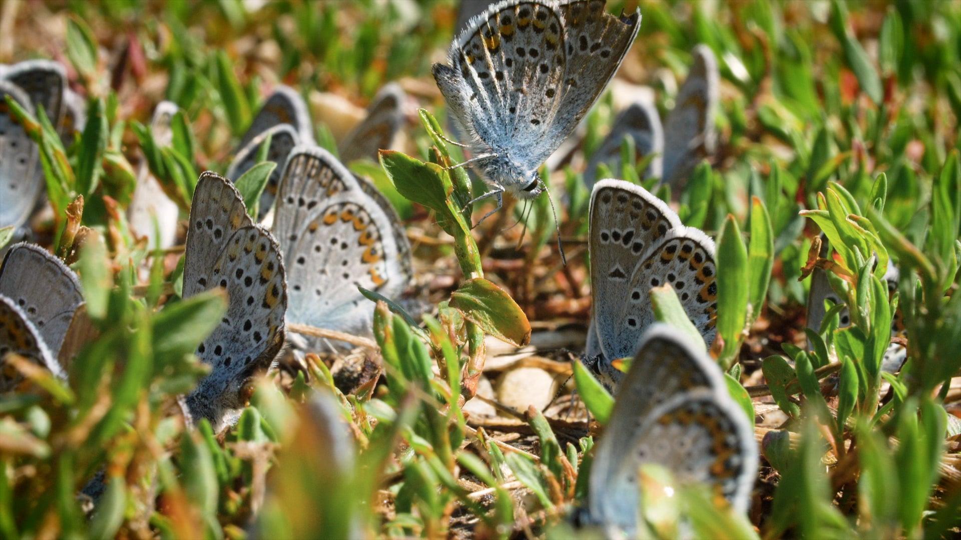 Butterflies Selects_HQ