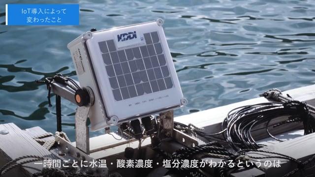 KDDI株式会社さま 福井県小浜市「鯖、復活」養殖効率化プロジェクト