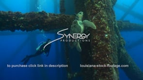 515 Hawkbill sea turtle finds food under oil and gas platform texas louisiana offshore drilling