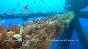 517 coral sponge growing gulf of mexico oil gas deep water drilling rig stock footage video