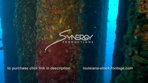 521 gulf of mexico deepwater offshore oil drilling rig marine ecosystem