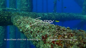 506 coral barnacles sponge growing on oil rig legs of gulf of mexico