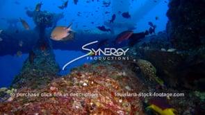 507 Epic awesome shot fish swim under oil rig gas platform Louisiana Texas offshore